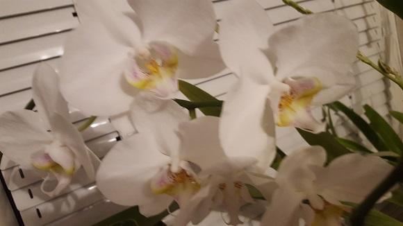 Отглеждане на орхидеи 3