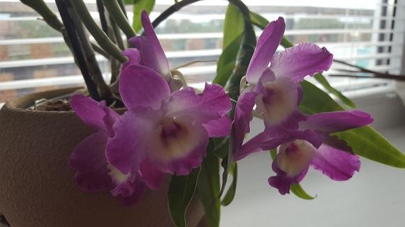 Отглеждане на орхидеи 4