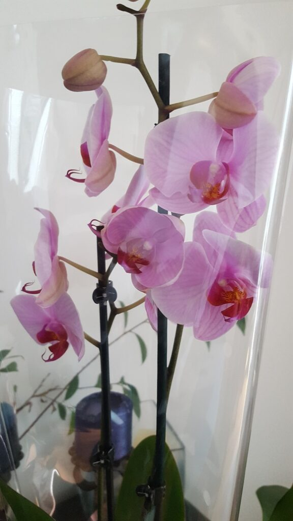 Отглеждане на орхидеи 1